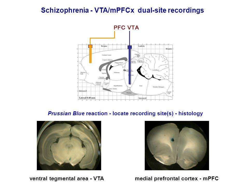Schizophrenia - VTA/mPFCx dual-site recordings medial prefrontal cortex - mPFCventral tegmental area - VTA Prussian Blue reaction - locate recording s