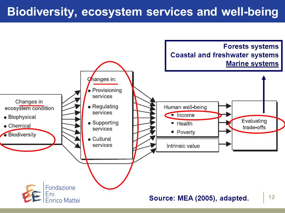 12 Source: MEA (2005), adapted. Forests systems Coastal and freshwater systems Marine systems Biodiversity, ecosystem services and well-being