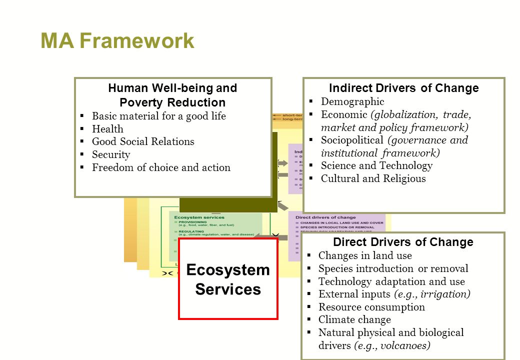 MA Framework Direct Drivers Indirect Drivers Ecosystem Services Human Well-being Direct Drivers of Change Changes in land use Species introduction or