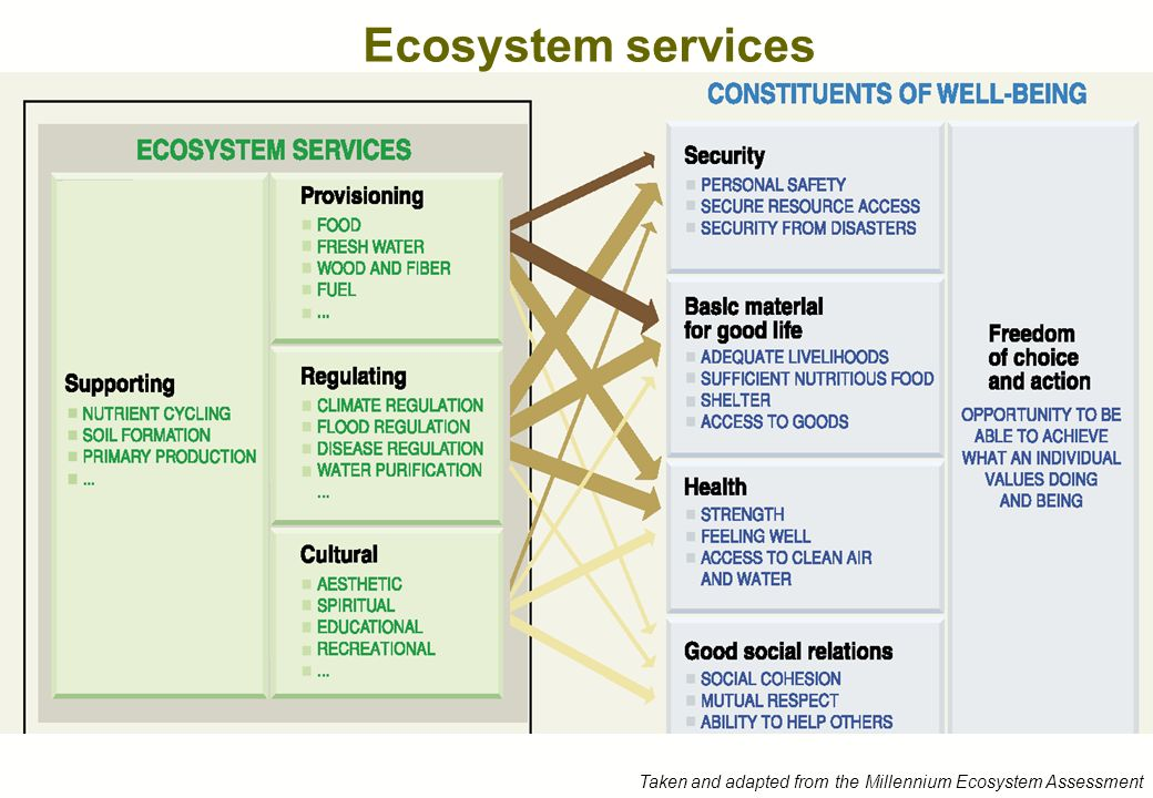 Ecosystem services Taken and adapted from the Millennium Ecosystem Assessment