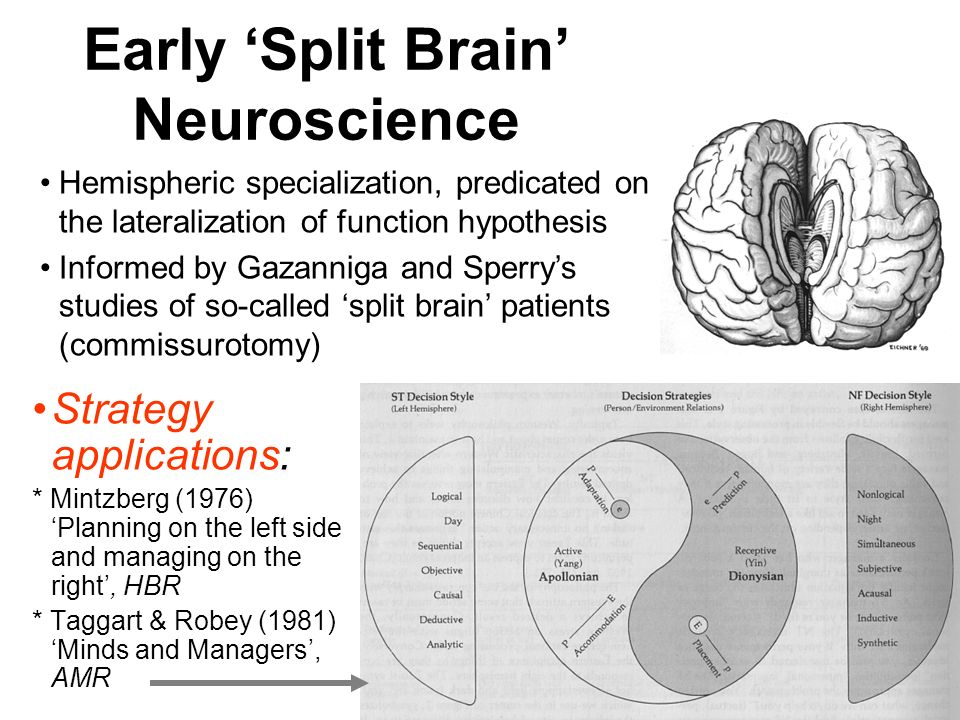 Early Split Brain Neuroscience Strategy applications: * Mintzberg (1976) Planning on the left side and managing on the right, HBR * Taggart & Robey (1