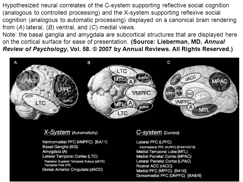 Hypothesized neural correlates of the C-system supporting reflective social cognition (analogous to controlled processing) and the X-system supporting