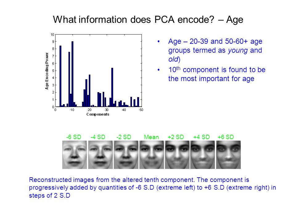 What information does PCA encode.