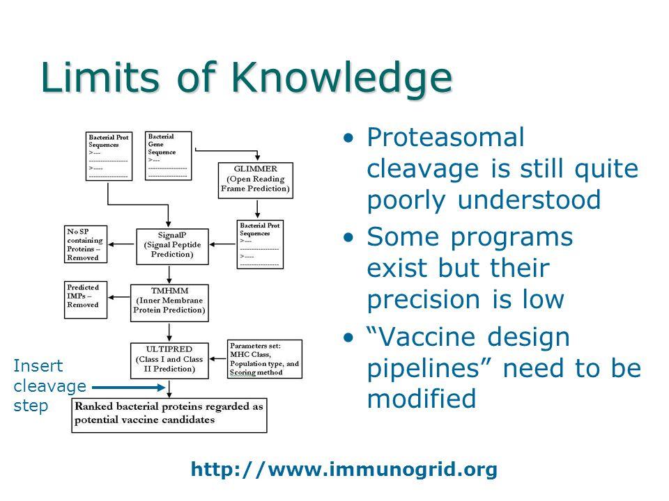 Molecules of the Adaptive Immune System Immunoglobulin IgG (From The Immunoglobin Factsbook 2001) MHC Class II CD4 T-cell response Endocytosed antigen