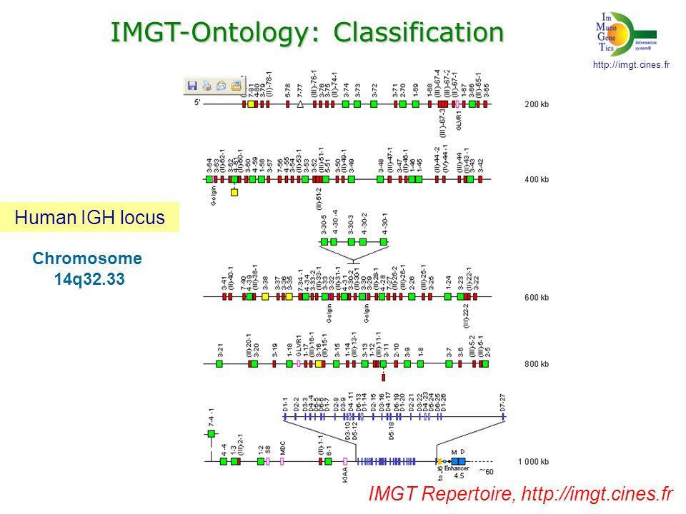 [ membrane, IgM ] Heavy chain Light chain Alpha -Beta Gamma -Delta Contribution of the 2 V-DOMAINs to the antigen binding site V-J-REGION V-D-J-REGION V-DJ-REGION V-DOMAIN http://imgt.cines.fr Immunoglobulin (IG) T cell receptor (TR) IMGT-Ontology:Description