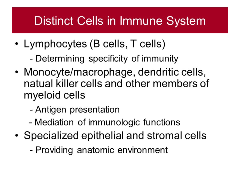 Distinct Cells in Immune System Lymphocytes (B cells, T cells) - Determining specificity of immunity Monocyte/macrophage, dendritic cells, natual killer cells and other members of myeloid cells - Antigen presentation - Mediation of immunologic functions Specialized epithelial and stromal cells - Providing anatomic environment