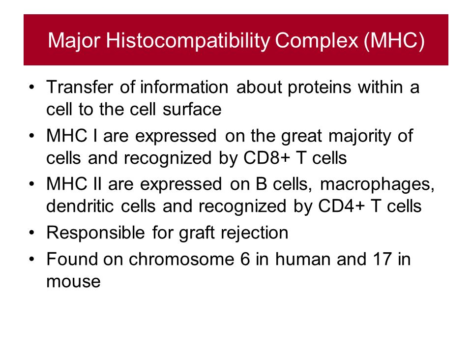 Major Histocompatibility Complex (MHC) Transfer of information about proteins within a cell to the cell surface MHC I are expressed on the great majority of cells and recognized by CD8+ T cells MHC II are expressed on B cells, macrophages, dendritic cells and recognized by CD4+ T cells Responsible for graft rejection Found on chromosome 6 in human and 17 in mouse