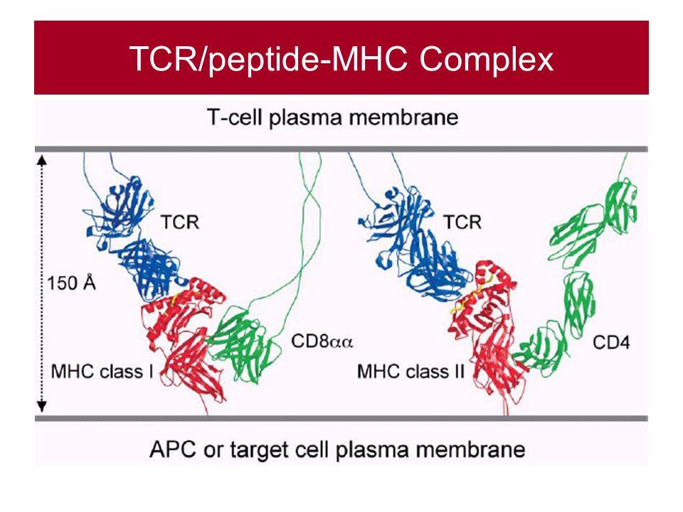 TCR/peptide-MHC Complex