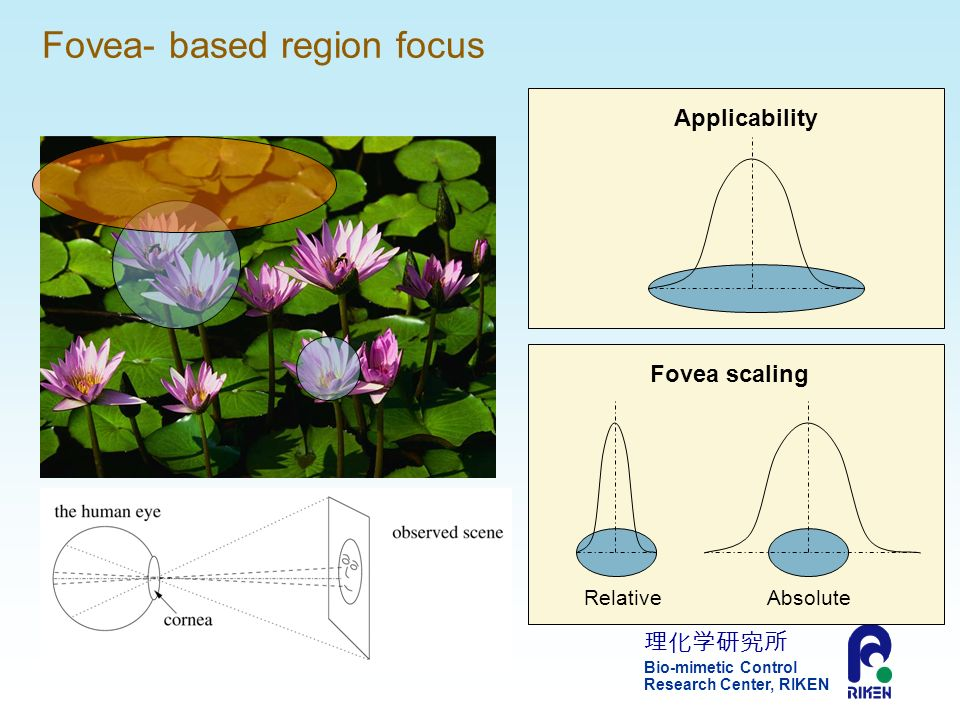 Bio-mimetic Control Research Center, RIKEN 11 Fovea- based region focus ApplicabilityFovea scaling RelativeAbsolute