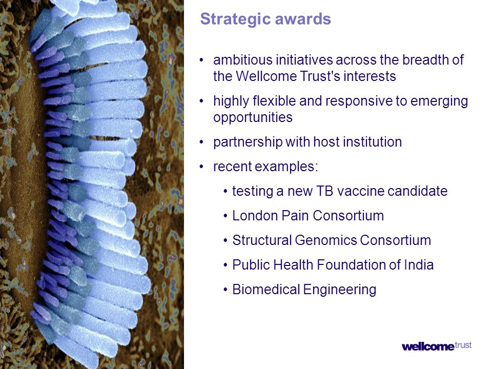ambitious initiatives across the breadth of the Wellcome Trust s interests highly flexible and responsive to emerging opportunities partnership with host institution recent examples: testing a new TB vaccine candidate London Pain Consortium Structural Genomics Consortium Public Health Foundation of India Biomedical Engineering Strategic awards
