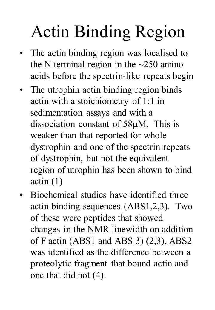 Actin Binding Region The actin binding region was localised to the N terminal region in the ~250 amino acids before the spectrin-like repeats begin The utrophin actin binding region binds actin with a stoichiometry of 1:1 in sedimentation assays and with a dissociation constant of 58 M.