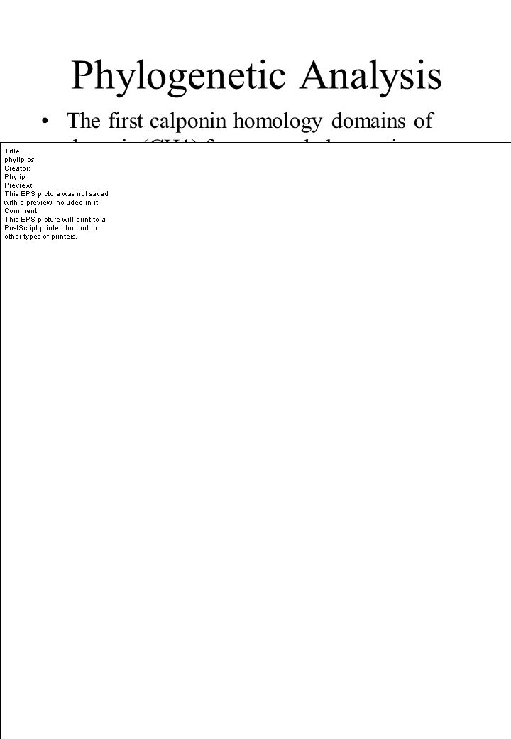 The first calponin homology domains of the pair (CH1) form one phylogenetic group, the second (CH2) form a second group and the single domains a third group Phylogenetic Analysis