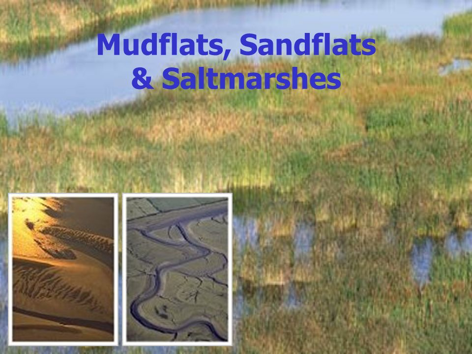 Mudflats, Sandflats & Saltmarshes