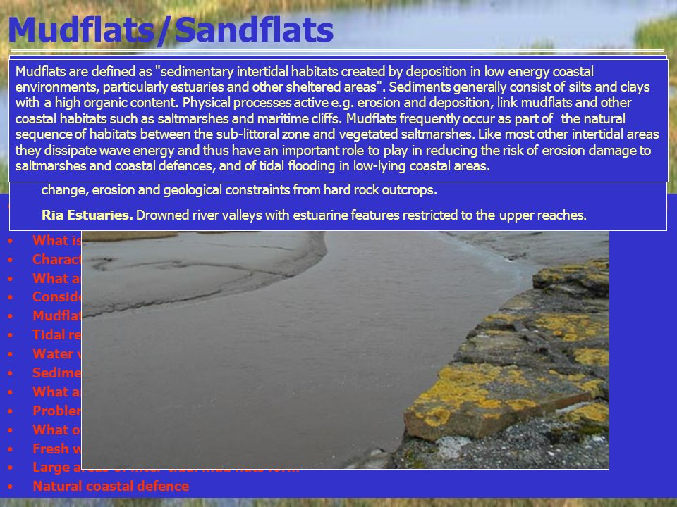 Mudflats/Sandflats In estuarine environments sediment that becomes too heavy to be transported will settle and be deposited What is an estuary? Charac