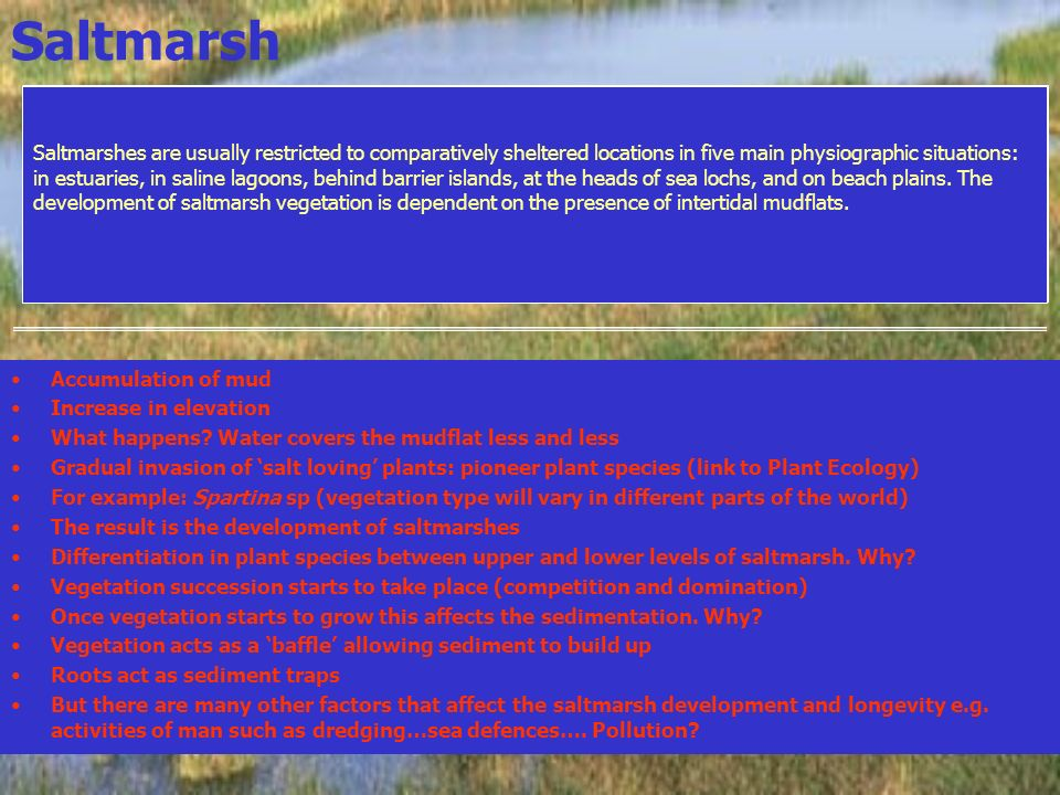 Saltmarsh Accumulation of mud Increase in elevation What happens? Water covers the mudflat less and less Gradual invasion of salt loving plants: pione