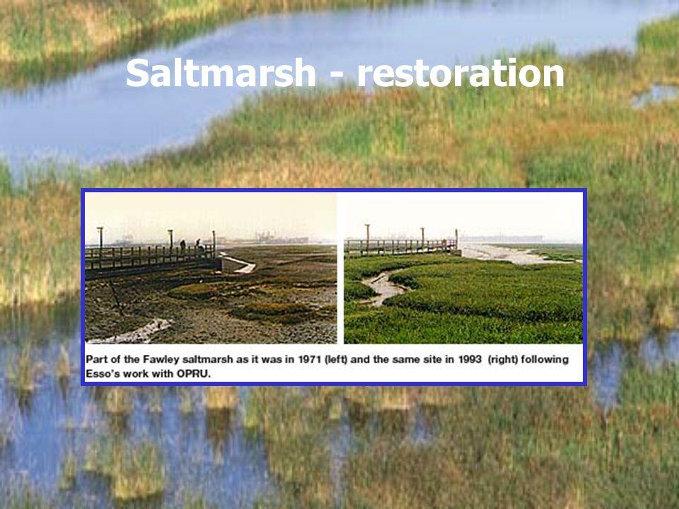 Saltmarsh - restoration