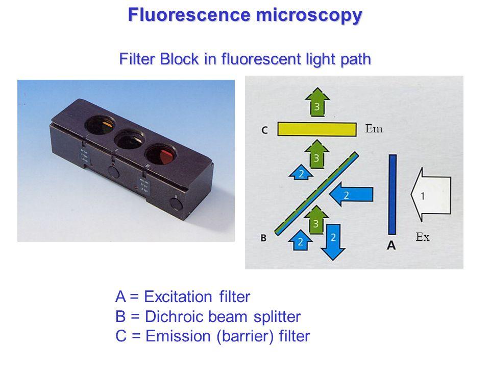 Fluorescence microscopy Filter Block in fluorescent light path A = Excitation filter B = Dichroic beam splitter C = Emission (barrier) filter Em Ex