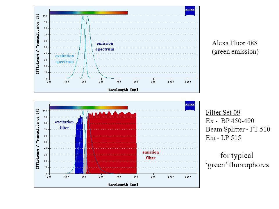Filter Set 09 Ex - BP 450-490 Beam Splitter - FT 510 Em - LP 515 Alexa Fluor 488 (green emission) for typical green fluorophores excitation spectrum emission spectrum emission filter excitation filter