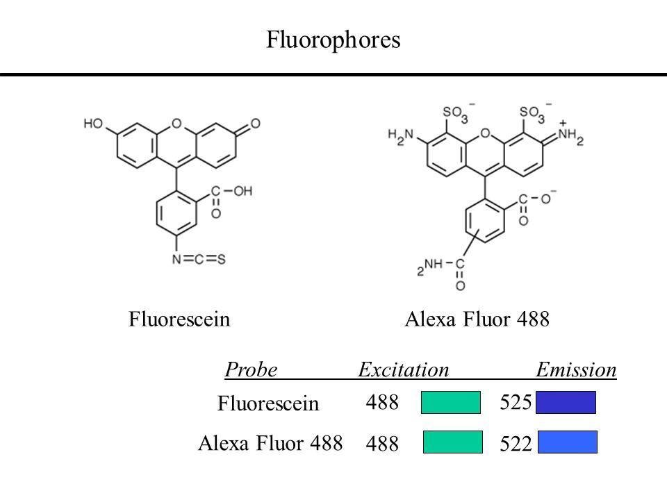 Fluorophores Fluorescein Alexa Fluor 488 488522 Fluorescein 488525 ProbeExcitation Emission