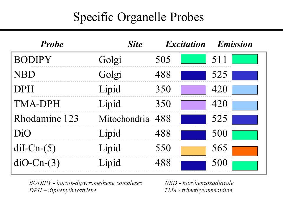 Specific Organelle Probes BODIPY Golgi505511 NBD Golgi488525 DPH Lipid350420 TMA-DPH Lipid350420 Rhodamine 123 Mitochondria 488525 DiOLipid488500 diI-Cn-(5)Lipid550565 diO-Cn-(3)Lipid488500 Probe Site Excitation Emission BODIPY - borate-dipyrromethene complexes NBD - nitrobenzoxadiazole DPH – diphenylhexatriene TMA - trimethylammonium