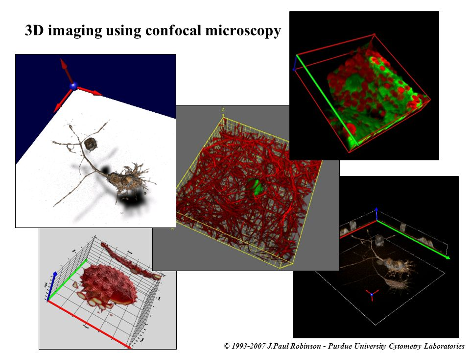 3D imaging using confocal microscopy © 1993-2007 J.Paul Robinson - Purdue University Cytometry Laboratories