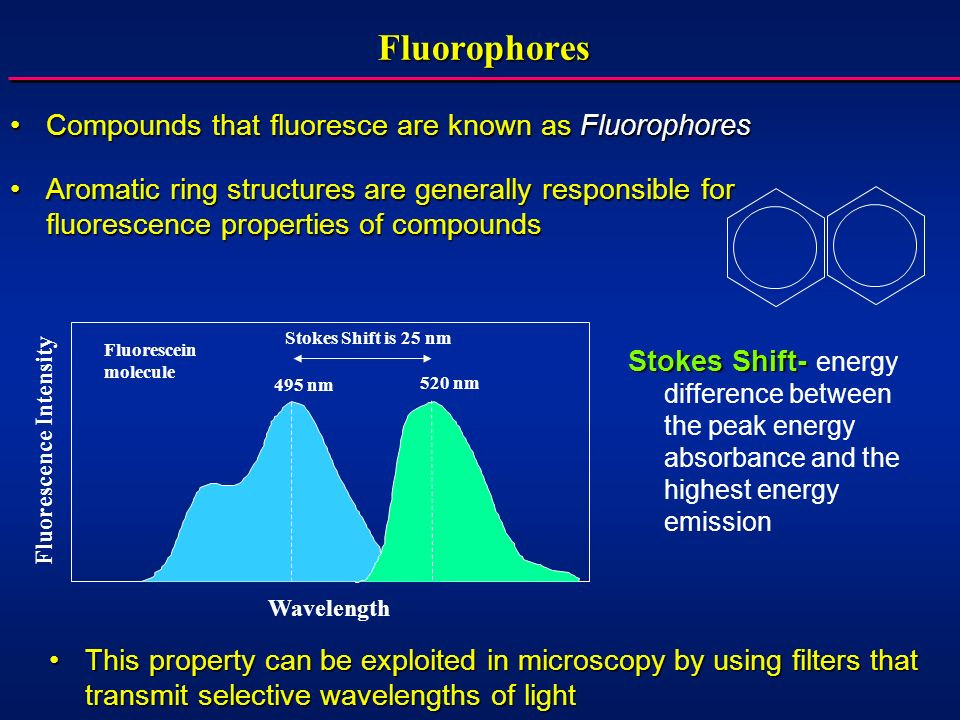 Fluorophores Compounds that fluoresce are known as FluorophoresCompounds that fluoresce are known as Fluorophores Stokes Shift- Stokes Shift- energy difference between the peak energy absorbance and the highest energy emission 495 nm 520 nm Stokes Shift is 25 nm Fluorescein molecule Fluorescence Intensity Wavelength This property can be exploited in microscopy by using filters that transmit selective wavelengths of lightThis property can be exploited in microscopy by using filters that transmit selective wavelengths of light Aromatic ring structures are generally responsible for fluorescence properties of compoundsAromatic ring structures are generally responsible for fluorescence properties of compounds