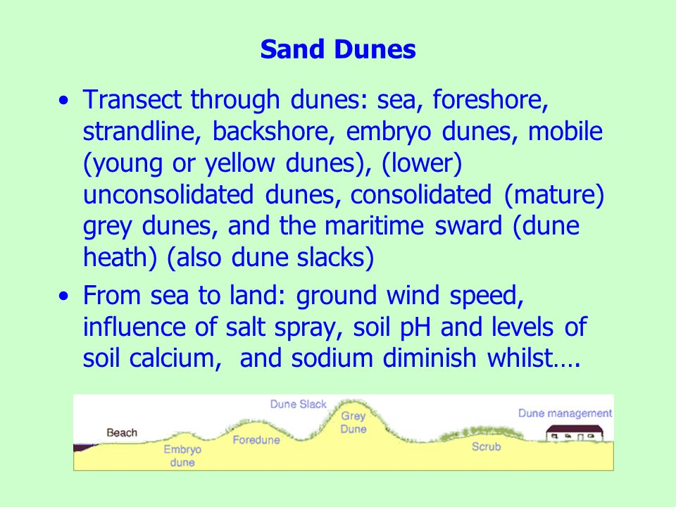 Sand Dunes Transect through dunes: sea, foreshore, strandline, backshore, embryo dunes, mobile (young or yellow dunes), (lower) unconsolidated dunes,