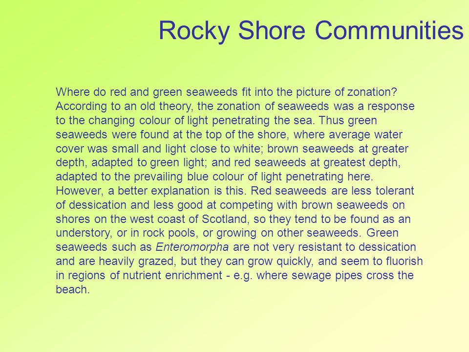Rocky Shore Communities Where do red and green seaweeds fit into the picture of zonation? According to an old theory, the zonation of seaweeds was a r