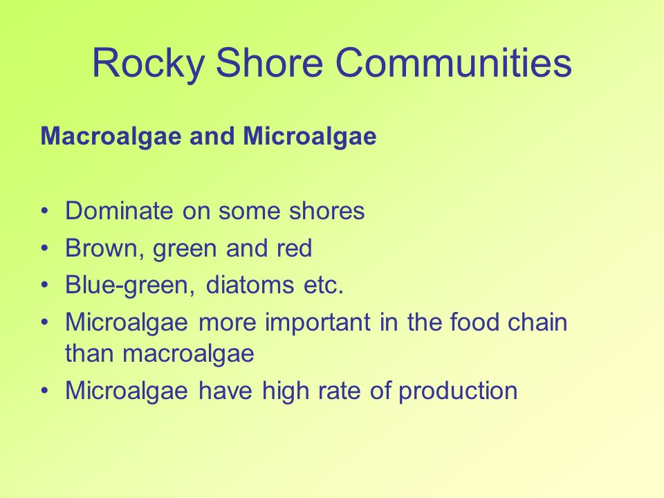 Rocky Shore Communities Macroalgae and Microalgae Dominate on some shores Brown, green and red Blue-green, diatoms etc. Microalgae more important in t