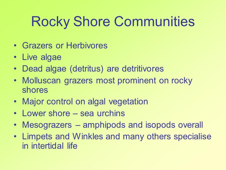 Rocky Shore Communities Grazers or Herbivores Live algae Dead algae (detritus) are detritivores Molluscan grazers most prominent on rocky shores Major
