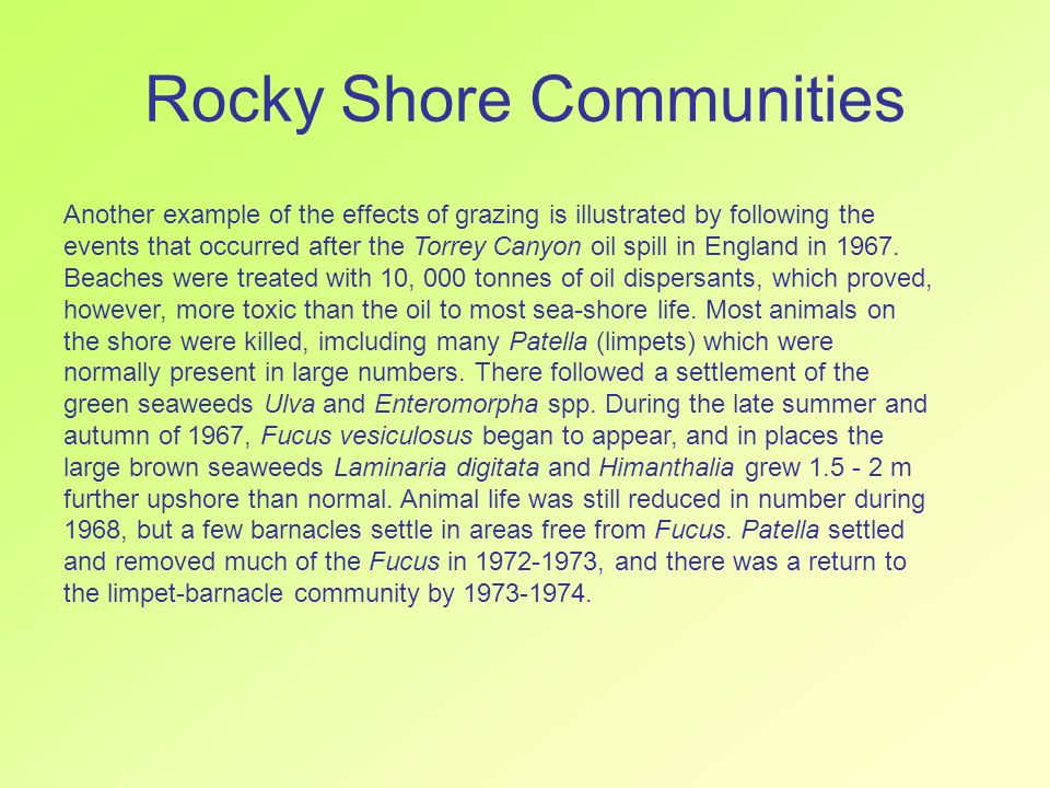 Rocky Shore Communities Another example of the effects of grazing is illustrated by following the events that occurred after the Torrey Canyon oil spi