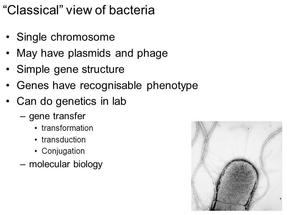 Classical view of bacteria Single chromosome May have plasmids and phage Simple gene structure Genes have recognisable phenotype Can do genetics in lab –gene transfer transformation transduction Conjugation –molecular biology