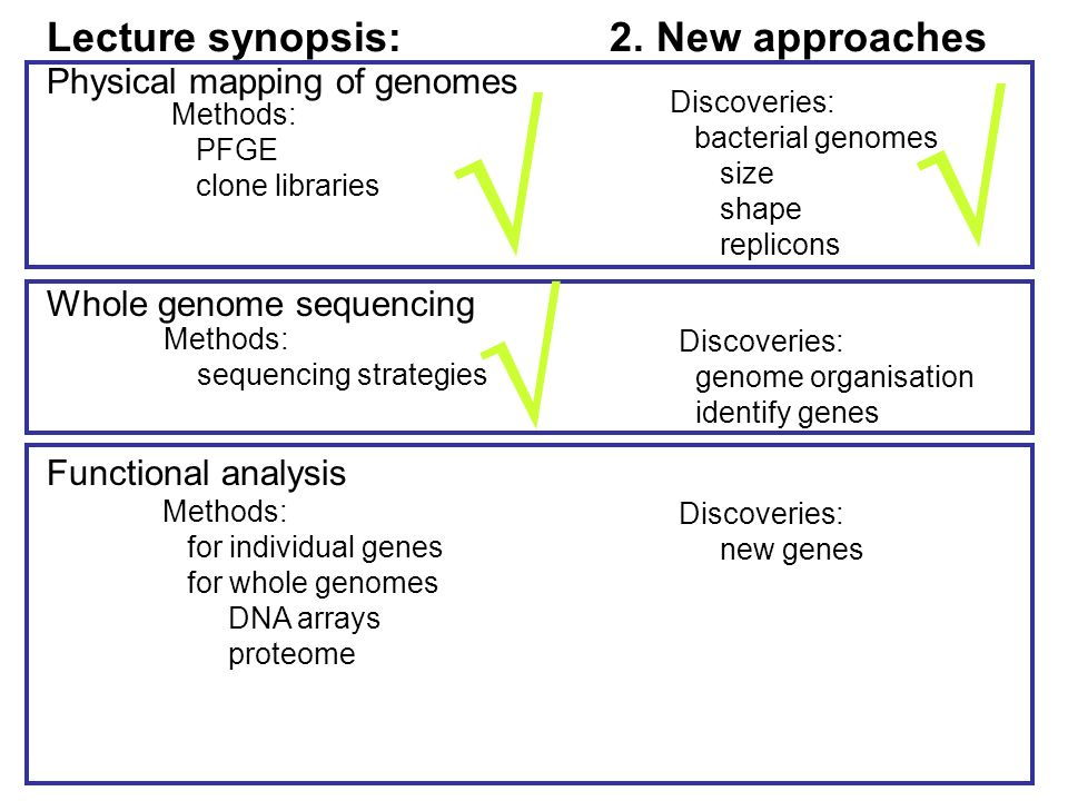 Physical mapping of genomes Methods: PFGE clone libraries Discoveries: bacterial genomes size shape replicons Whole genome sequencing Methods: sequencing strategies Discoveries: genome organisation identify genes Functional analysis Discoveries: new genes Methods: for individual genes for whole genomes DNA arrays proteome Lecture synopsis: 2.