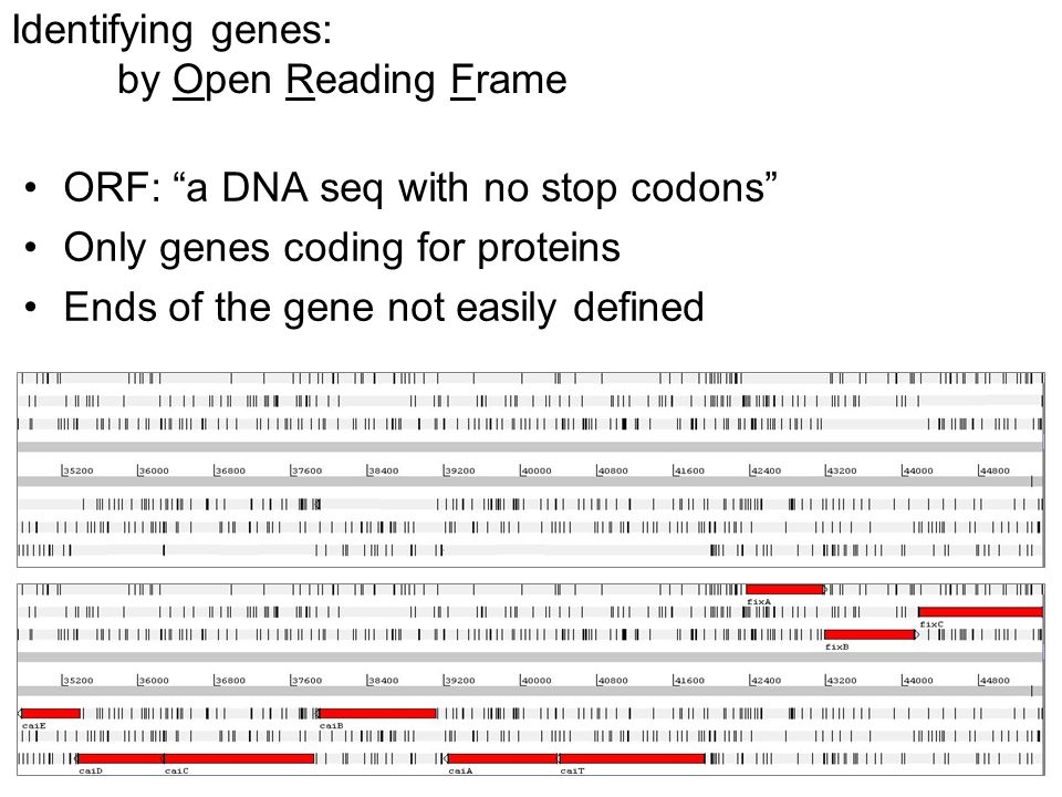 Identifying genes: by Open Reading Frame ORF: a DNA seq with no stop codons Only genes coding for proteins Ends of the gene not easily defined