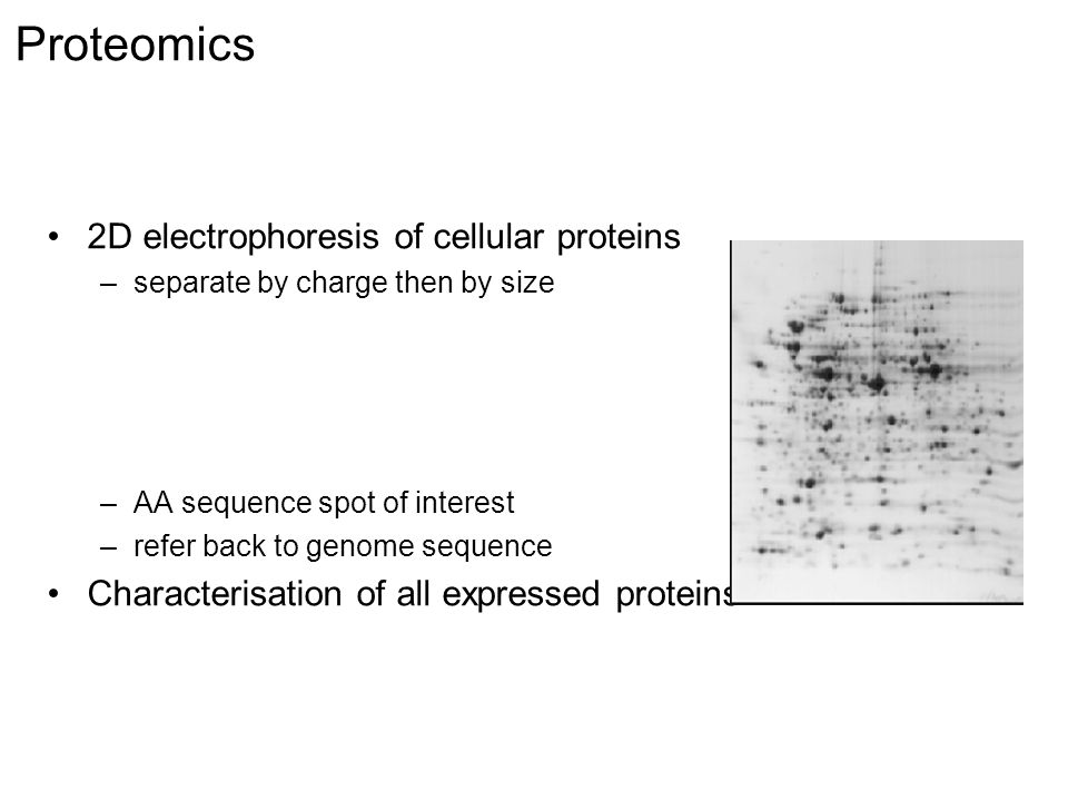 Proteomics 2D electrophoresis of cellular proteins –separate by charge then by size –AA sequence spot of interest –refer back to genome sequence Characterisation of all expressed proteins