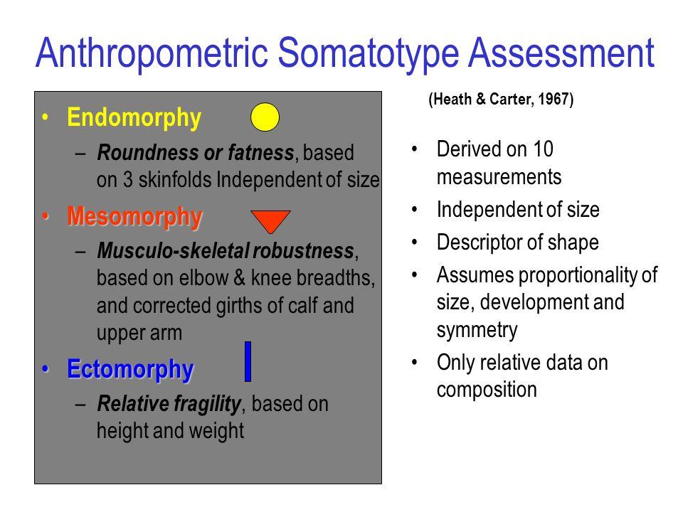 Endomorphy – Roundness or fatness, based on 3 skinfolds Independent of size Mesomorphy Mesomorphy – Musculo-skeletal robustness, based on elbow & knee