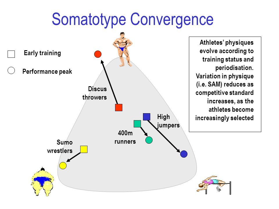Sumo wrestlers High jumpers Discus throwers 400m runners Early training Performance peak Athletes physiques evolve according to training status and pe