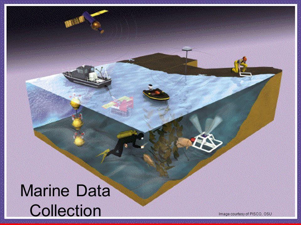 Image courtesy of PISCO, OSU Marine Data Collection