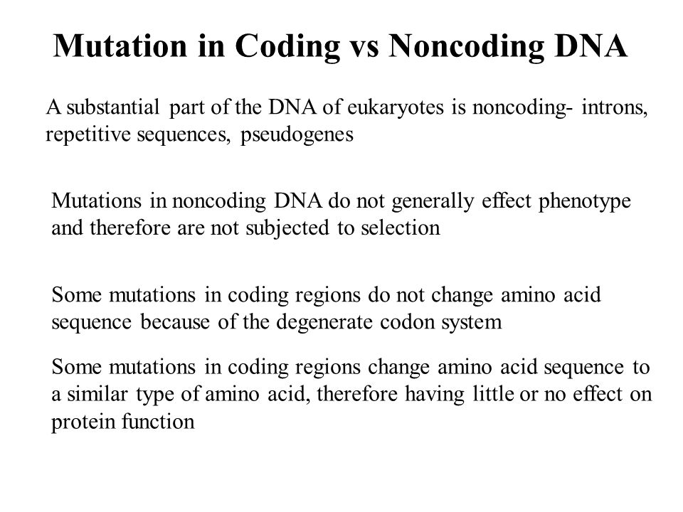 Mutation in Coding vs Noncoding DNA Mutations in noncoding DNA do not generally effect phenotype and therefore are not subjected to selection A substantial part of the DNA of eukaryotes is noncoding- introns, repetitive sequences, pseudogenes Some mutations in coding regions do not change amino acid sequence because of the degenerate codon system Some mutations in coding regions change amino acid sequence to a similar type of amino acid, therefore having little or no effect on protein function