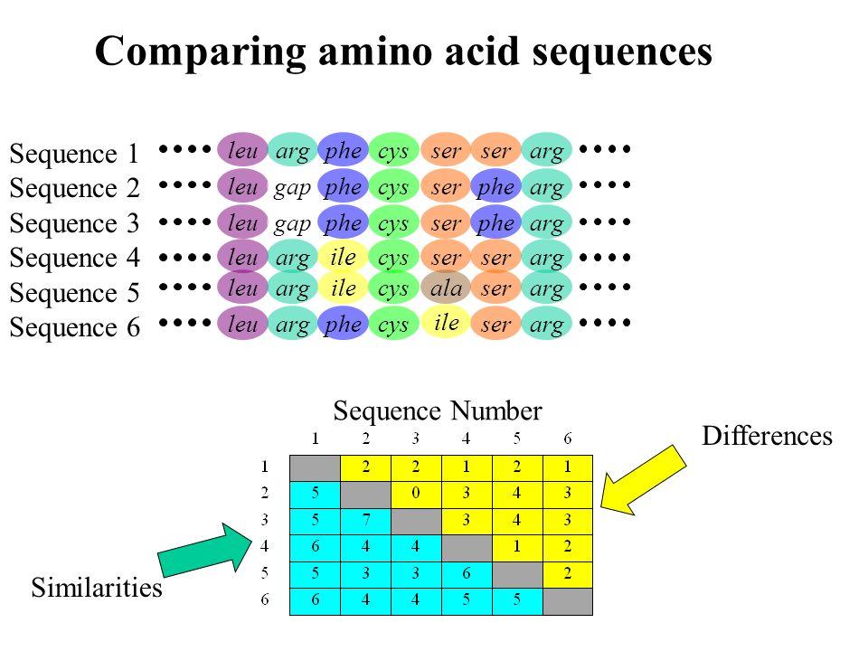 leuargphecysserarg leugapphecysphearg leugapphecysphearg leuarg ile cysserarg leuargilecysserarg leuargphecysserarg ser ala ile Sequence 1 Sequence 2 Sequence 3 Sequence 4 Sequence 5 Sequence 6 Sequence Number Differences Similarities Comparing amino acid sequences