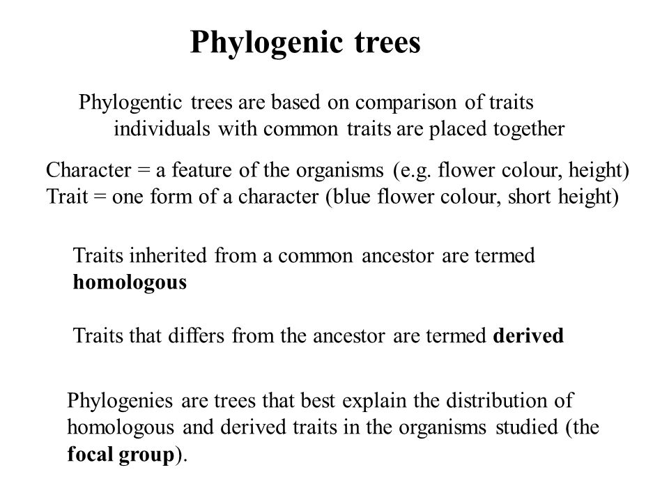 Phylogenic trees Phylogentic trees are based on comparison of traits individuals with common traits are placed together Traits inherited from a common ancestor are termed homologous Traits that differs from the ancestor are termed derived Phylogenies are trees that best explain the distribution of homologous and derived traits in the organisms studied (the focal group).