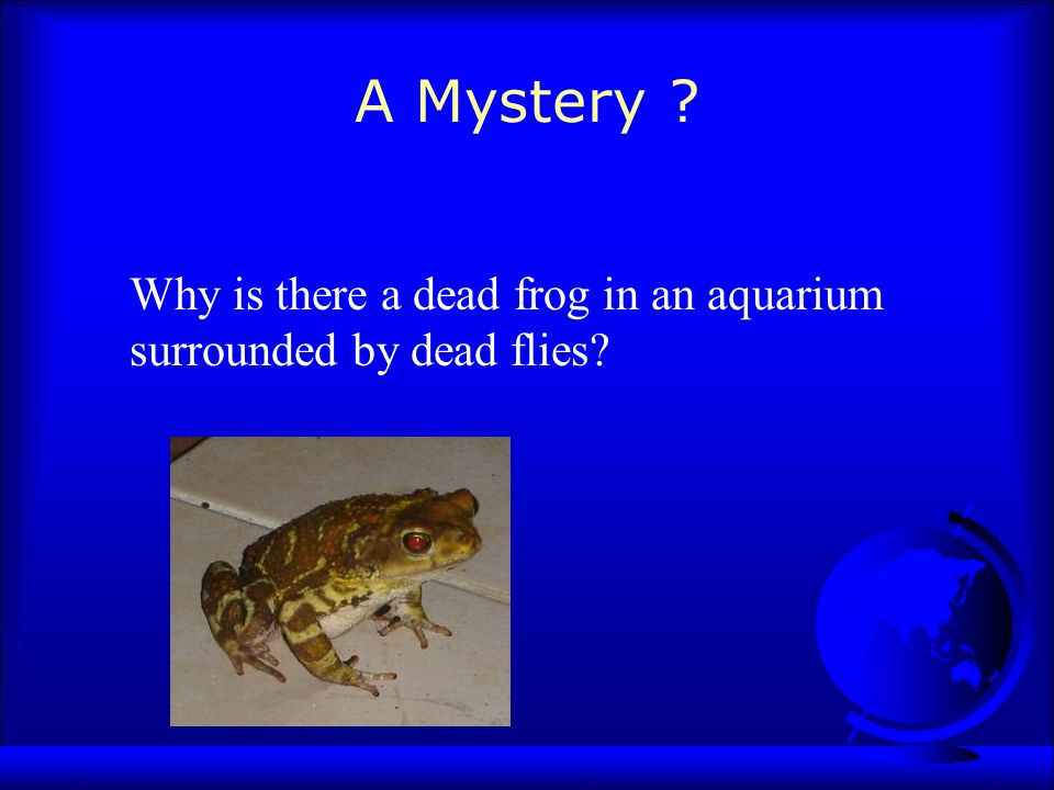 A Mystery ? Why is there a dead frog in an aquarium surrounded by dead flies?