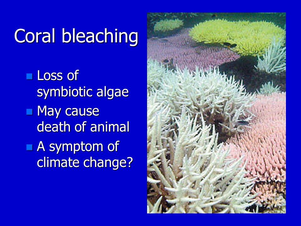 Coral bleaching n Loss of symbiotic algae n May cause death of animal n A symptom of climate change?