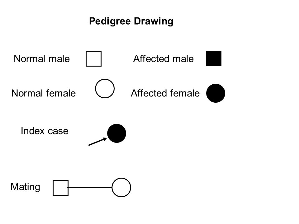 Normal maleAffected male Normal femaleAffected female Pedigree Drawing Index case Mating