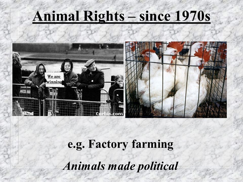 Animal Rights – since 1970s e.g. Factory farming Animals made political