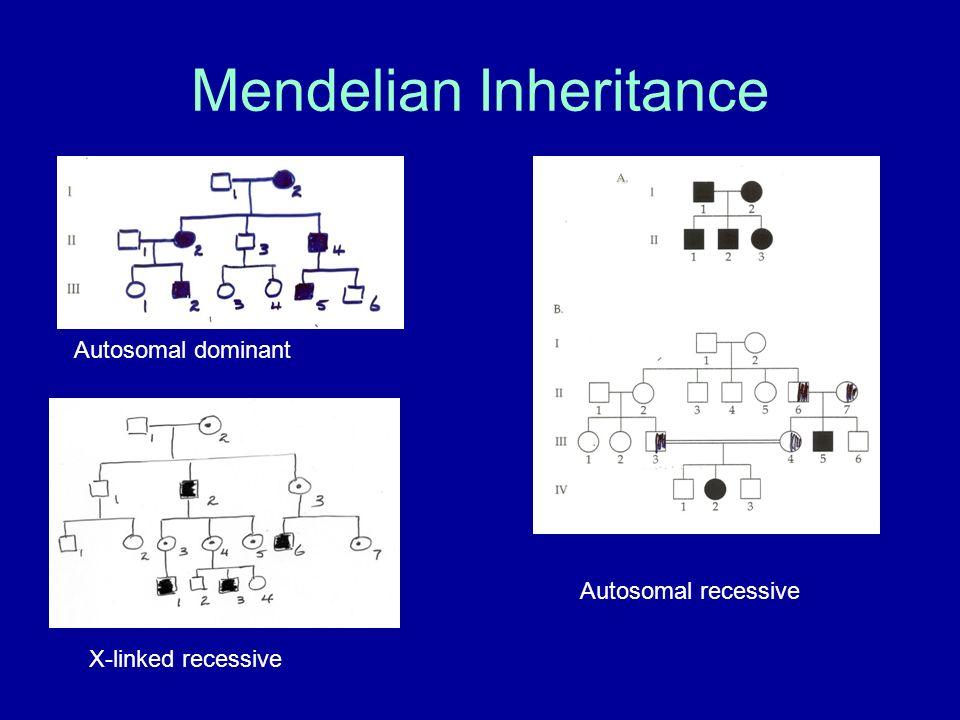 Mendelian Inheritance Autosomal dominant Autosomal recessive X-linked recessive