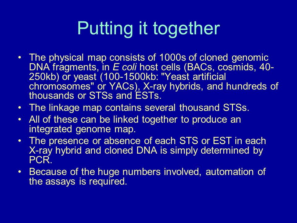 Putting it together The physical map consists of 1000s of cloned genomic DNA fragments, in E coli host cells (BACs, cosmids, 40- 250kb) or yeast (100-1500kb: Yeast artificial chromosomes or YACs), X-ray hybrids, and hundreds of thousands or STSs and ESTs.