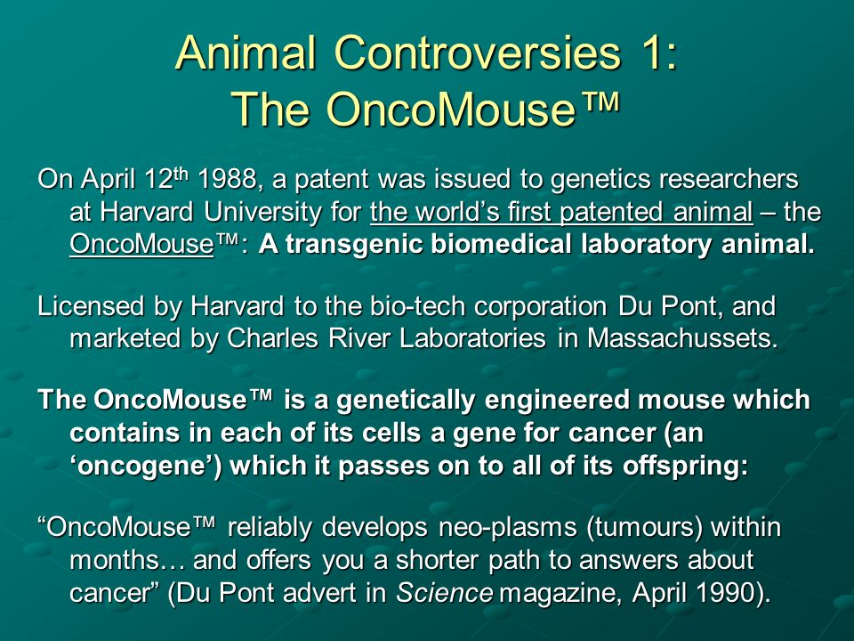 Animal Controversies 1: The OncoMouse On April 12 th 1988, a patent was issued to genetics researchers at Harvard University for the worlds first pate