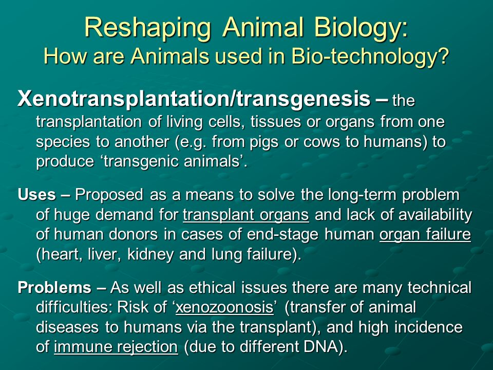 Reshaping Animal Biology: How are Animals used in Bio-technology? Xenotransplantation/transgenesis – the transplantation of living cells, tissues or o