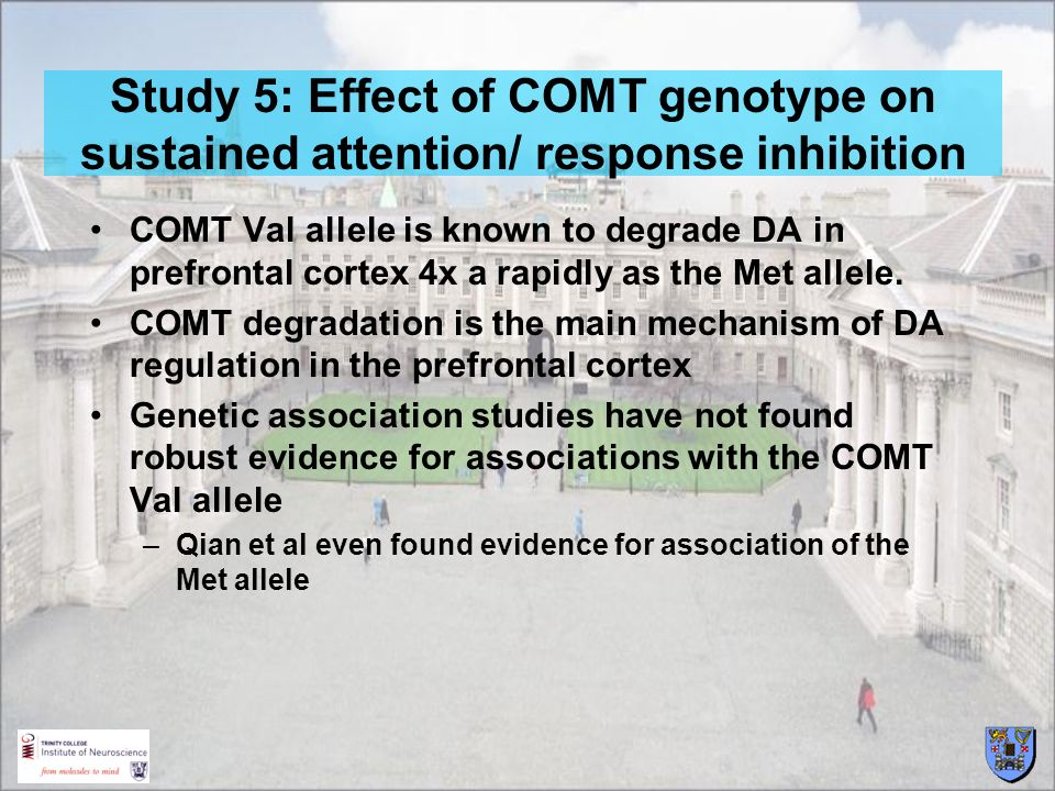 Study 5: Effect of COMT genotype on sustained attention/ response inhibition COMT Val allele is known to degrade DA in prefrontal cortex 4x a rapidly